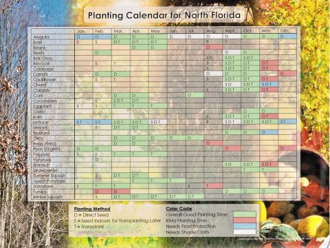Planting calendar for North Florida